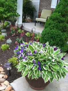 Hostas in a pot for the front porch. Garden Yard Ideas, Lawn And Garden, Garden Projects, Garden Pots, Outdoor Planters, Outdoor Gardens, Container Plants, Container Gardening, Shade Garden Plants