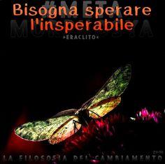 #Metamorphosya #Eraclito #speranzaultimamorire #insperabile #lafilosofiadelcambiamento