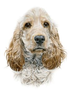 Hamish Coloured Pencil Copyright Laura Hardie 2012 One of two drawings I have been working on these past few weeks has been . Animal Paintings, Animal Drawings, Art Drawings, Cocker Spaniel, English Bulldog Art, English Cocker, British Bulldog, Crayons Pastel, Dog Artwork