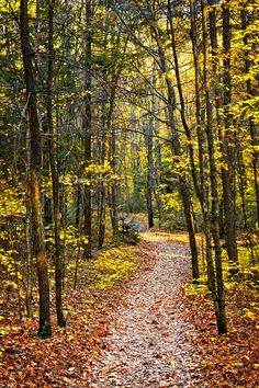 Fall forest path with fallen leaves covering the ground, Algonquin Park, Canada. Forest Trail, Forest Path, Autumn Forest, Stone Cabin, Algonquin Park, Park Landscape, Photographic Prints, Architecture, Countryside