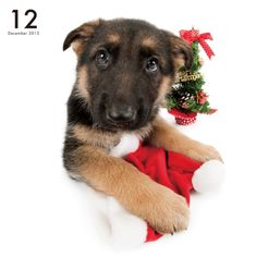 Artlist Collection THE DOG German Shepherd Dog— 2017 calendar available at amazon US and UK (Deliver to Europe).