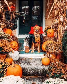 Happy Halloween, Fröhliches Halloween, Spooky Halloween Decorations, Halloween Outfits, Outdoor Halloween, Halloween Pumpkins, Cute Halloween Pictures, Halloween Office, Autumn Decorations