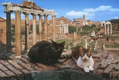 Teletransported to Giancarlo Gasponi http://travelling-cats.blogspot.be/2015/01/cats-from-rome-italy.html. These kitties pose in front of the Roman forum.