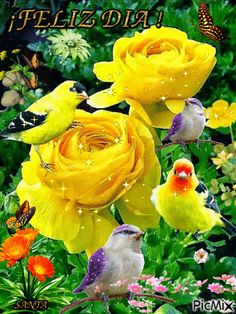 The perfect Flowers Animated GIF for your conversation. Discover and Share the best GIFs on Tenor. Flowers Gif, Beautiful Rose Flowers, Beautiful Gif, Beautiful Birds, Gif Animé, Animated Gif, Love Pictures, Beautiful Pictures, Gif Bonito