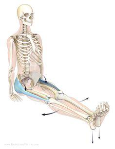 yoga anatomy on pinterest  yoga muscle and anatomy