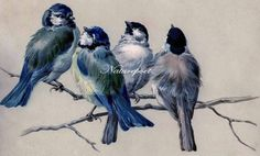 Pretty Birds Digital Art Image by naturepoet on Etsy, $4.50
