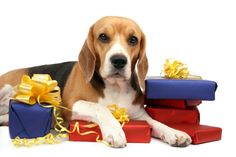 7 Local Holiday Gifts Your Dog will Adore!