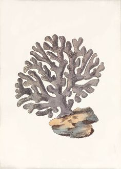 Coral Art Print Coral Reef Drawing, Sea Life Art, Nature Drawing, Botanical Prints, Oeuvre D'art, Under The Sea, Doodle Art, Printable Art, Sea Shells