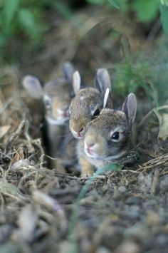 Newborn bunnies.  I've raised these before. It's pretty awesome! :D   C.S.