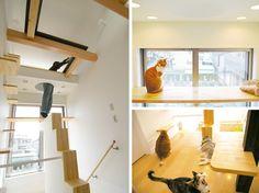 L'appart le plus cat-friendly au monde