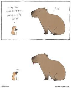 capybara, you so silly.