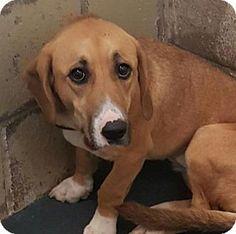 Fort Smith, AR - Basset Hound Mix. Meet Princess Daisy, a dog for adoption. http://www.adoptapet.com/pet/17286353-fort-smith-arkansas-basset-hound-mix