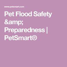 Pet Flood Safety & Preparedness | PetSmart®