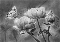 butterflies drawing petals how to flowers draw