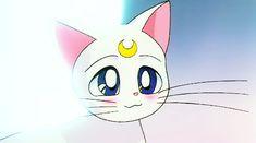 sailor moon cat cute