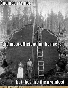 Gnomes are not the most efficient lumberjacks...