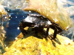 Crab by Francesco Spina on 500px