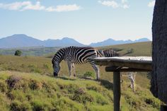 Safari, Game Reserve, Camps, Luxury Villa, Villas, South Africa, Animals, Bowties, Luxury Condo