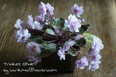 African Violet miniature - Trinket O'Pink   #African  #violet  #Trinket_ O'Pink