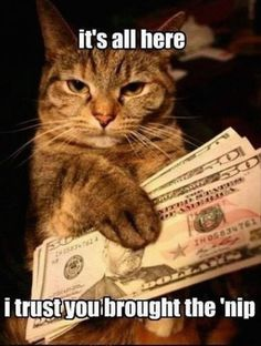It's all here! I trust you brought the 'nip! Don't forget to like & Share! Just Love Cats