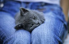 8 Amazing Little-Did-You-Know Facts about Cats [LIST]