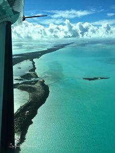 SPLENDID MARKET : Bahama Blues, manatees #mermaidlife....
