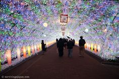 High & Low Lights of Living in Japan
