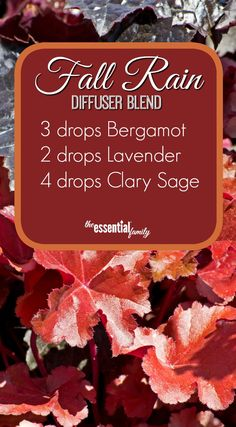 These spicy, comforting, and inspiring fall diffuser recipes are the perfect partner for the cooler weather, plus FREE Printable. Fall Essential Oils, Essential Oil Diffuser Blends, Essential Oil Uses, Clary Sage Essential Oil, Diffuser Recipes, Diffuser Diy, Doterra Diffuser, Doterra Essential Oils, Belleza Natural
