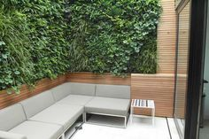 Vertical planting allows for good size bench sitting in small courtyard.