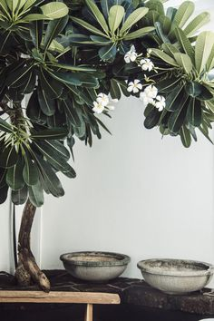 via Urban Outfitters - Plant Pot - Ideas of Plant Pot - via Urban Outfitters Indoor Garden, Garden Plants, House Plants, Outdoor Plants, Outdoor Gardens, Plantas Indoor, Urban Outfitters, Green Life, Tropical Garden