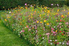Bloemenweide voor vlinders en bijen