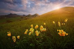 """Blooming Czech Central Mountains - <a href=""""http://www.danielrericha.cz"""">www.danielrericha.cz </a> <a href=""""https://www.instagram.com/danielrerichacz"""">I N S T A G R A M</a> 