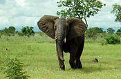 Wildlife of Benin - Wikipedia, the free encyclopedia
