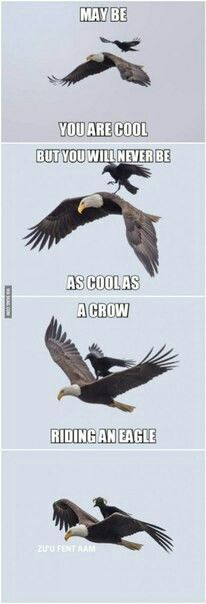 a realy cool crow ...