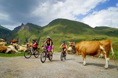 VTT, Les Diablerets, Isenau Summer Activities, Animals, Mtb Bike, Animaux, Animal, Animales, Summer Fun, Animais