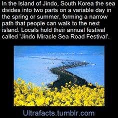 Once a year at Jindo Island in Jeollanam-do, the sea mysteriously parts and visitors can walk through it from the main island to a smaller nearby island called Modo. The path is nearly 2.9 kilometers long and up-to 40 meters wide.