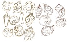 sea shells deviant art | Seashell Sketches: VPS items by Arcablue