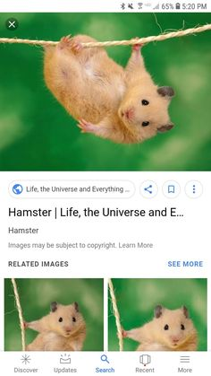 Hamster Lizard Yinrunx Parrot Adjustable Bird Harness and Leash Outdoor Flying Anti-bite for Bird Parrot