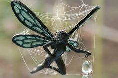 Web fairy