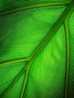 Leaf - Green | Grün | Verde | Grøn | Groen | 緑 | Emerald | Colour | Texture | Style | Form | Pattern |
