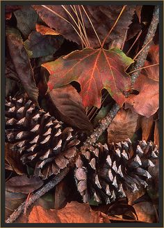 Pine cones (N collects these for his Granny & Papa) & fall leaves Fall Pictures, Fall Harvest, Autumn Inspiration, Fall Season, Four Seasons, Pine Cones, Autumn Leaves, Fall Decor, Plant Leaves