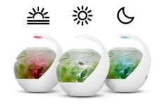 Avo: the self-cleaning tropical fish tank by Susan Shelley / Noux — Kickstarter