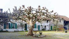Sotto l'albero [Paolo T.] Plants, Plant, Planets