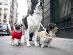 Wanna go for a walk? There's an app for that!