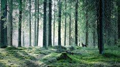forest-jyvaskyla-finland.jpg (800×450)