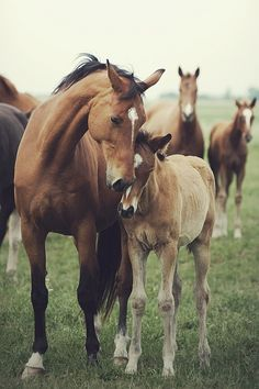 Horsing Around.  Horses.  (7/5/2013) Mother & Baby Animals (CTS)
