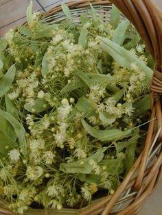 Herb Garden, Vegetable Garden, Home And Garden, Medicinal Herbs, Herbal Medicine, Life Is Good, Herbalism, Cabbage, Remedies