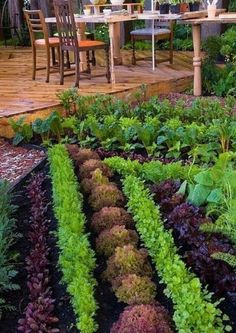 my dream garden: Veggie Landscaping - Beautiful Vegetable Garden & Backyard Deck and patio furniture, rows of colored lettuces, chard, carrots, and other edible food garden plants Garden Spaces, Garden Plants, Potager Garden, Vege Garden Design, Vege Garden Ideas, Permaculture Garden, Allotment Ideas, Vegetable Design, Patio Plants