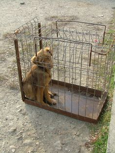 Witness of the silent suffering: A stray's life in Romania: În spatele gratiilor/ Behind bars Behind Bars, Romania, Dogs, Life, Animals, Animales, Animaux, Pet Dogs, Doggies