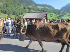 Auer Alpabtrieb Cow, In This Moment, Summer, Animals, Funny, Summer Time, Animales, Animaux, Cattle